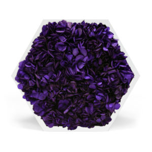 Element 6 Hydrangea Purple