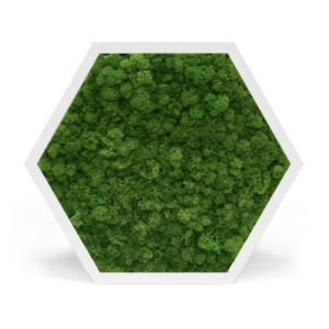 Element 6 Reindeer Moss Forest Green