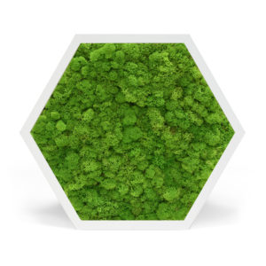 Element 6 Reindeer Moss light Green