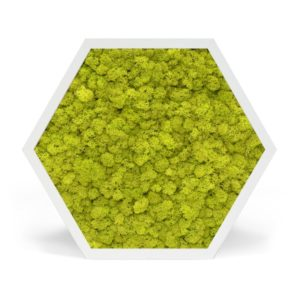 Element 6 Reindeer Moss Lime Green